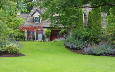 5 Tips for a Healthy Lawn During the Summer